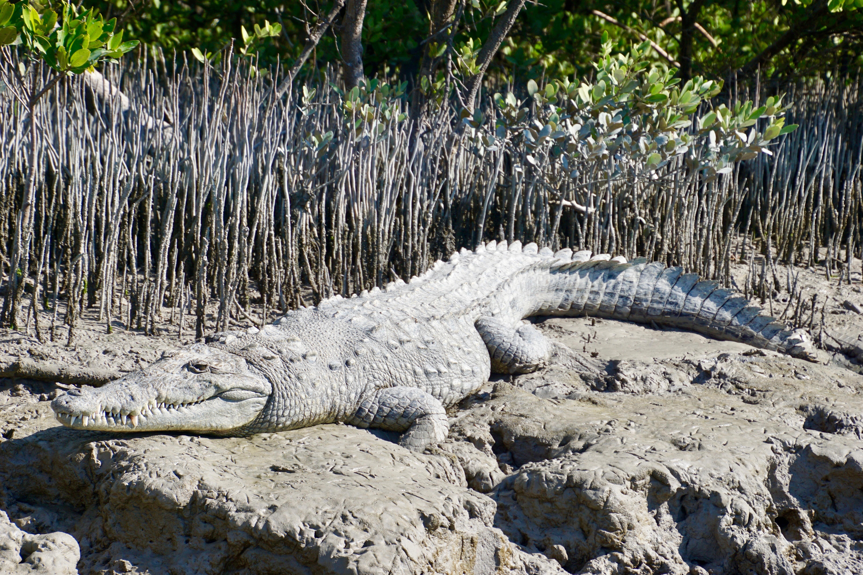 Alligators Florida gezinsreizen