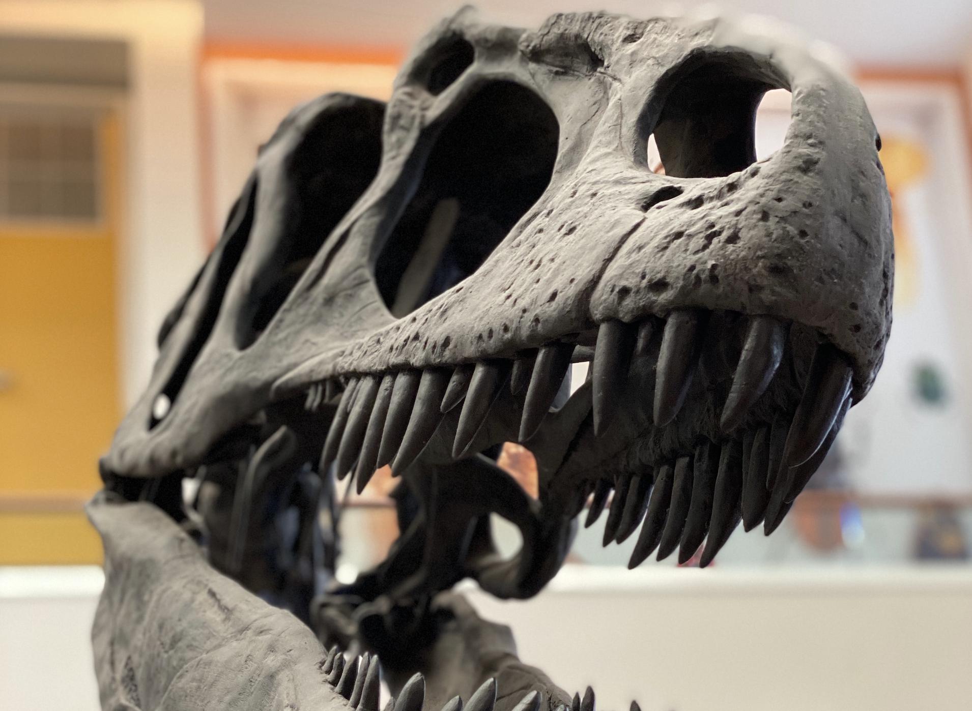 dinosaur restanten montana