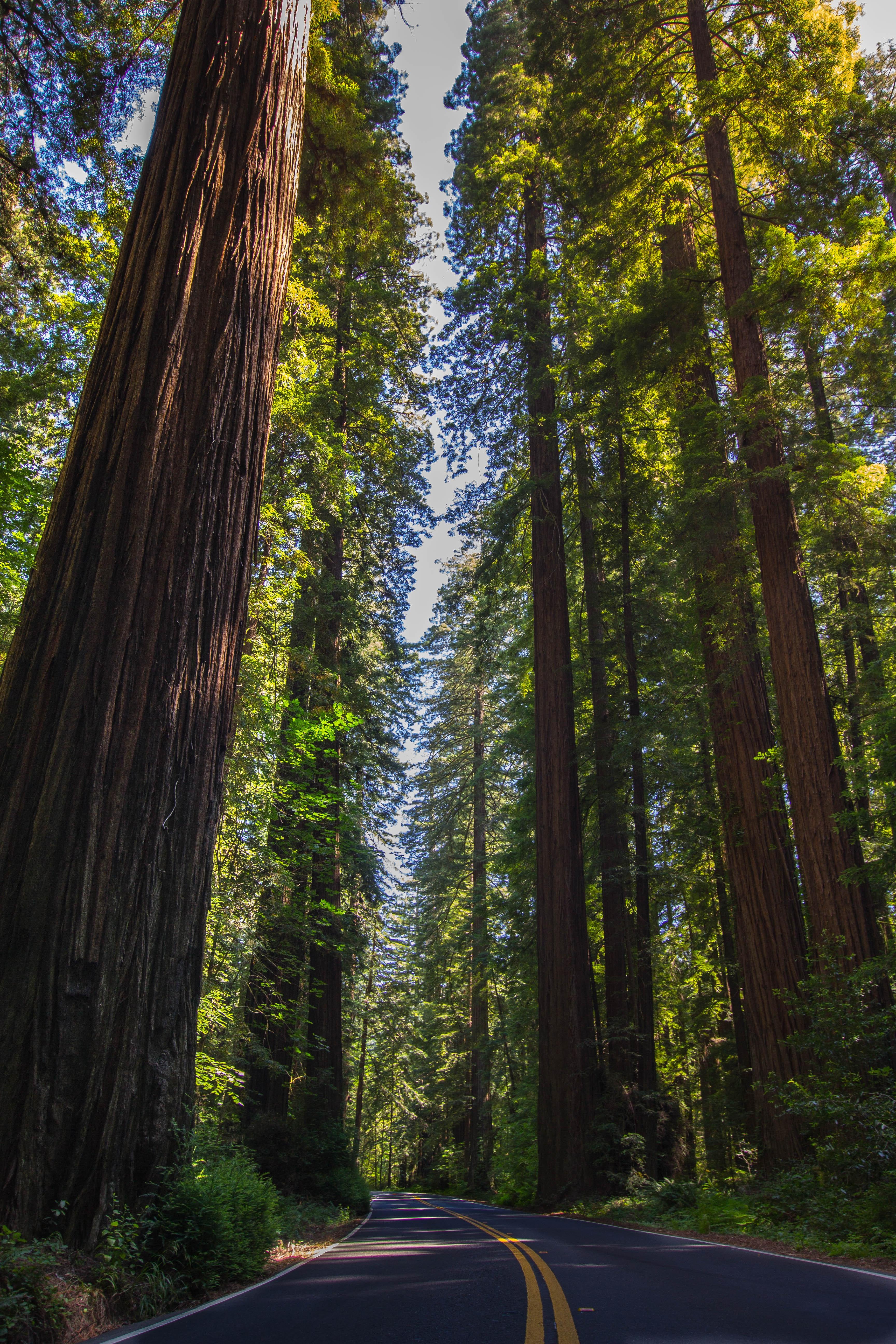 Redwood NP