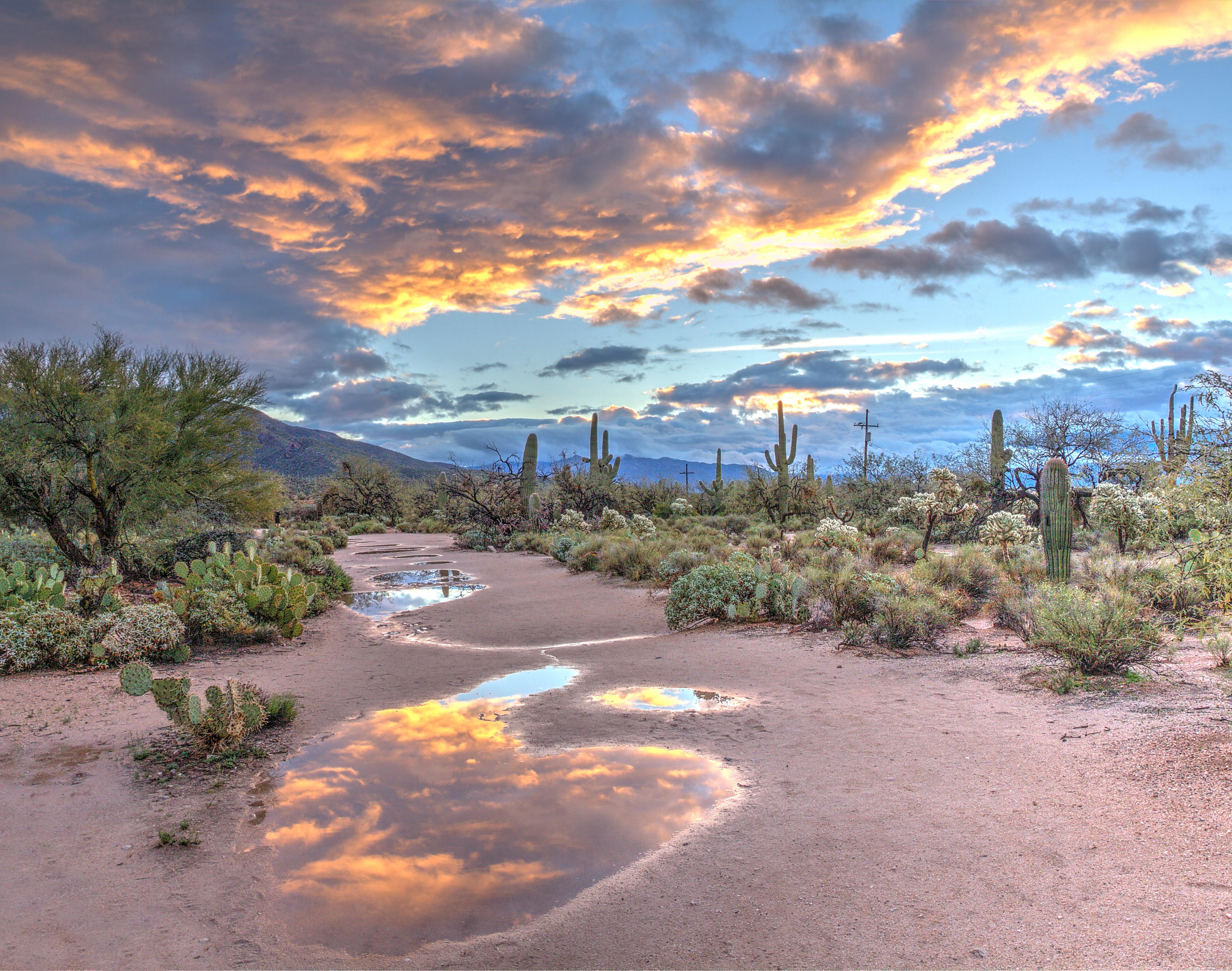 Saguaro National Park 4