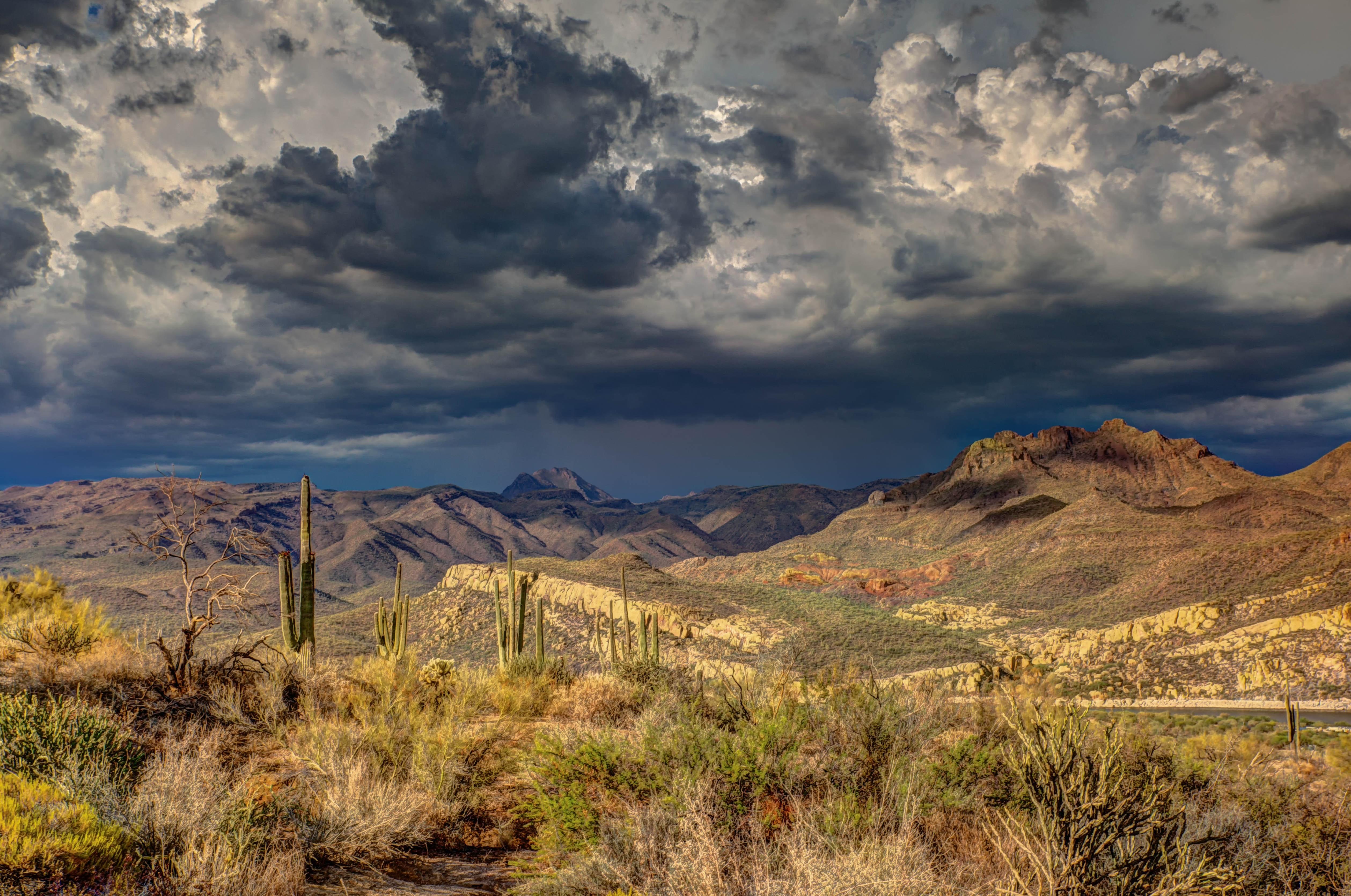 Saguaro 5