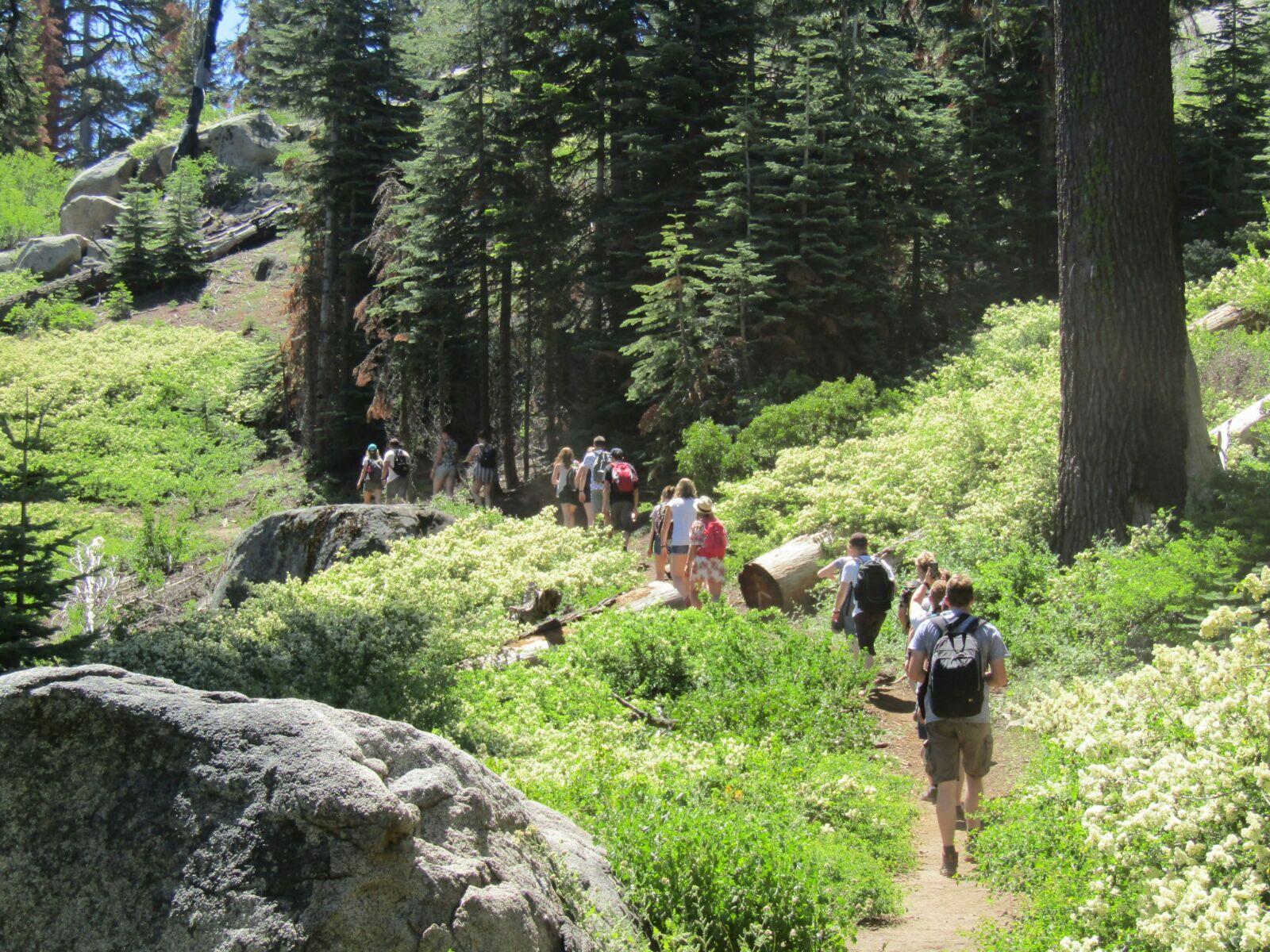 wandelen sequoia