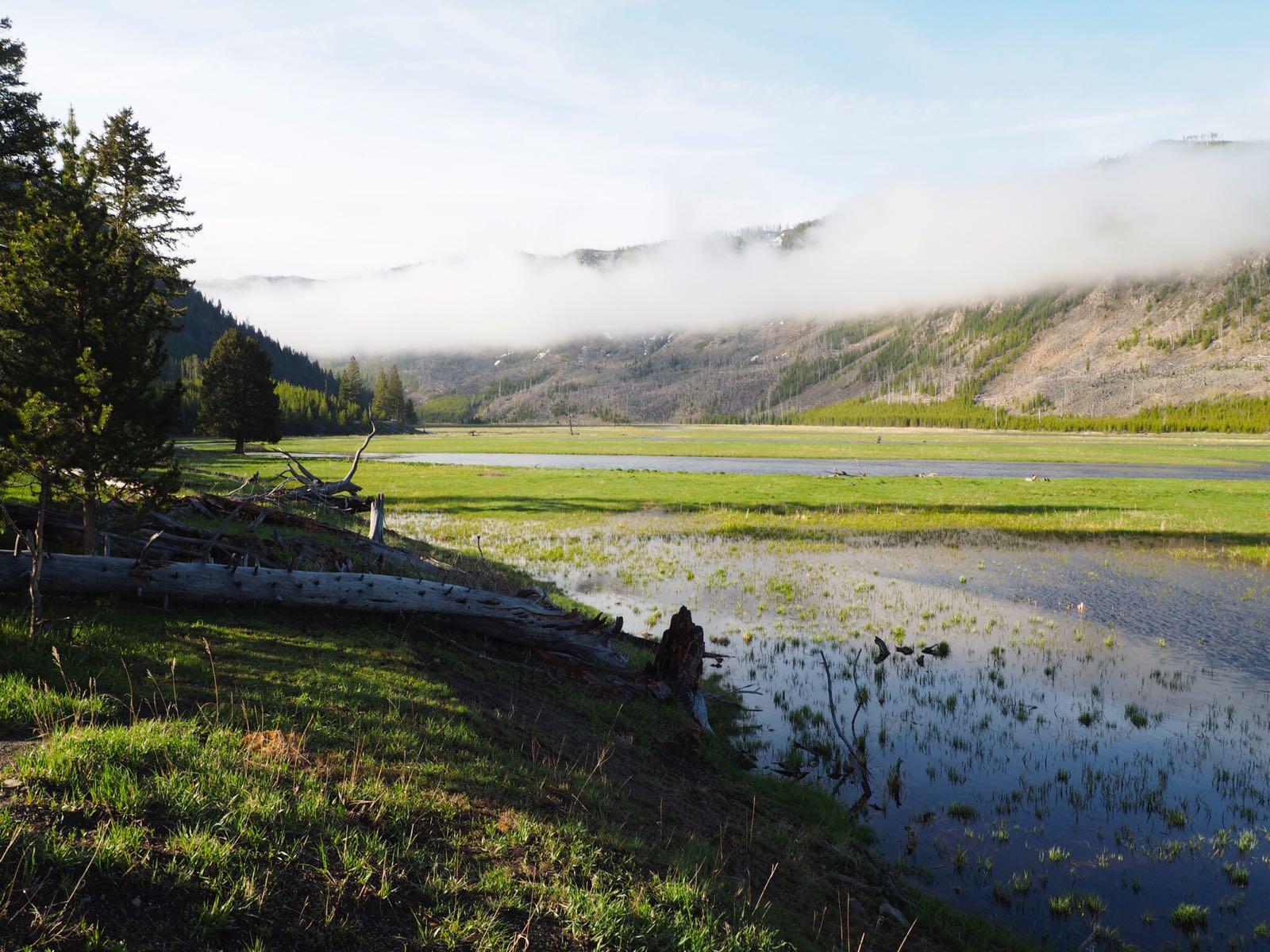 Yellowstone natuur