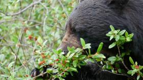 berenvoorzorgenwatdoen
