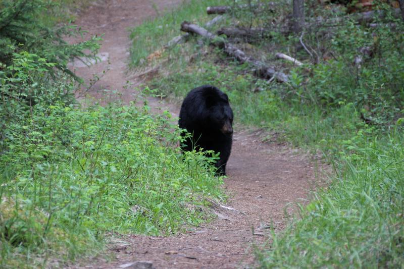 Kans op beren spotten