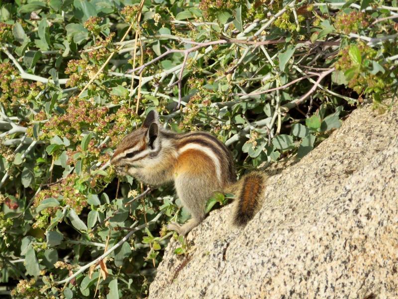 Eekhoorn gespot