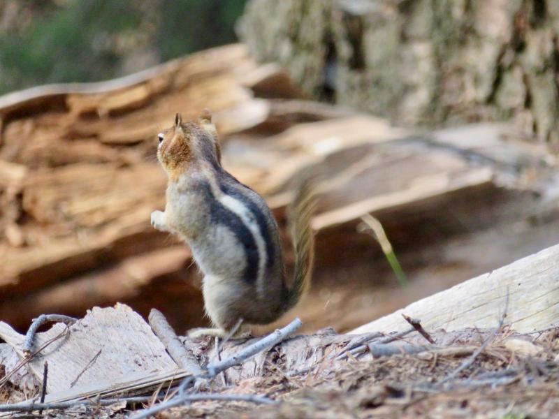 Eekhoorntjes in de nationale parken