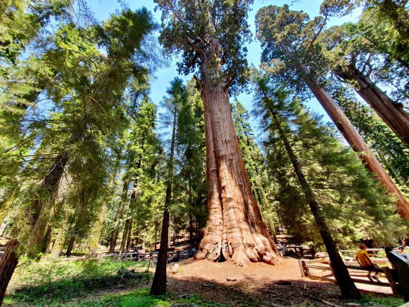 Sequoia National Park bezoeken