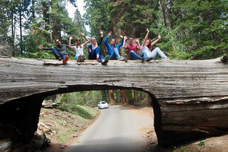 Tunnel Log, Sequoia NP, Californië