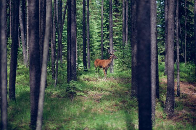 Wildlife Montana